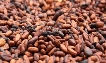 fèves-de-cacao