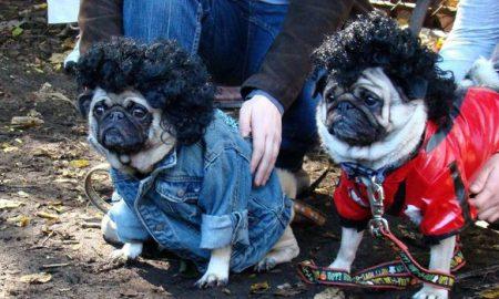 insolite-brésil-chiens-animaux