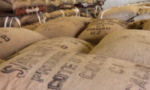Saf Cacao - Prime Group - agriculture - économie