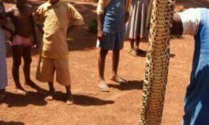 serpent-Niakaramandougou-instituteur
