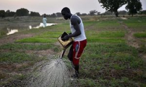 agriculture - ivoirienne