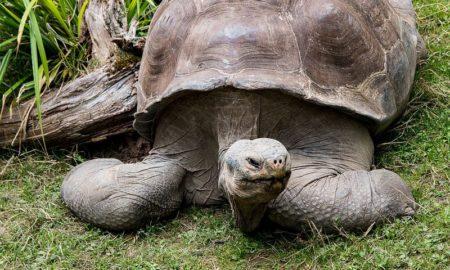 insolite-tortue-environnement