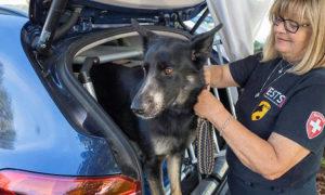 chien-police-insolite