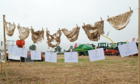 insolite-agriculture-la-fertilite-des-sols-mesuree-avec-des-slips