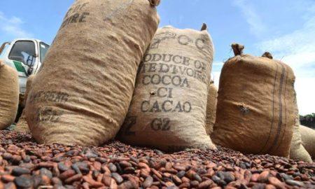 cacao-agriculture-secteur-primaire-economie-chocolat